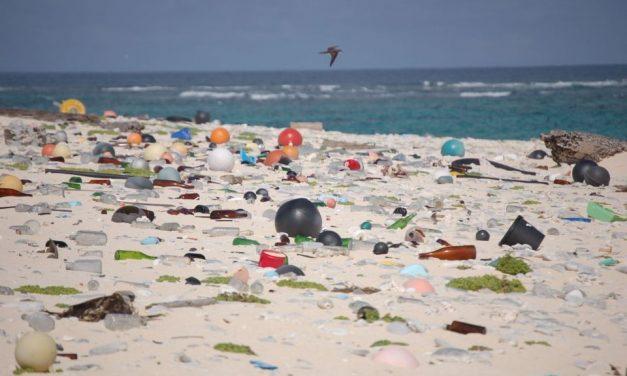 Queensland Councils going plastic free