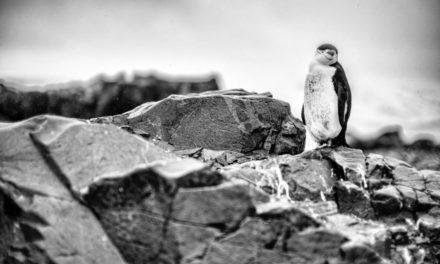 The World is on Notice – BirdLife Australia