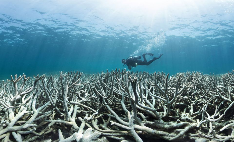Climate change 'clobbering' the reef, says AMCS