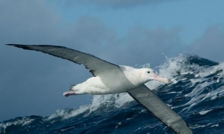 Seabird numbers in decline – new report
