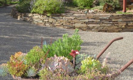 Open Garden: The Slate Garden, Willunga