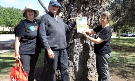 Willunga Tree Trail a blooming success