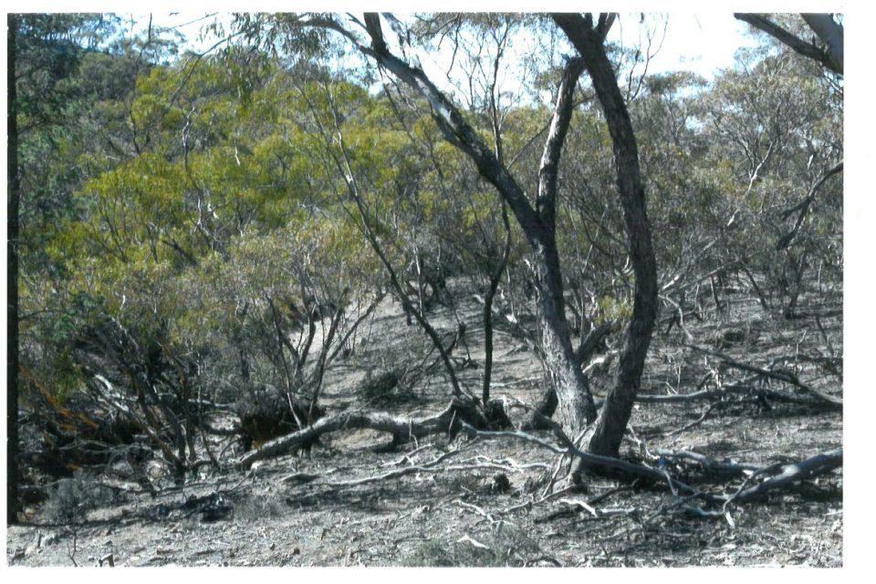 Bushfire emergency demands a new response