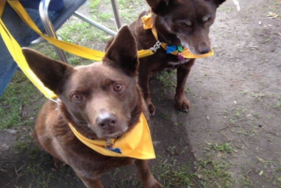 Have you heard of Yellow Dog Australia?