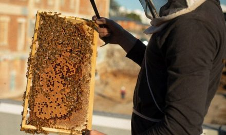 """West Village """"buzzing"""" with green activity"""