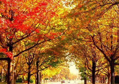 Autumn-leaves---Jun-2011