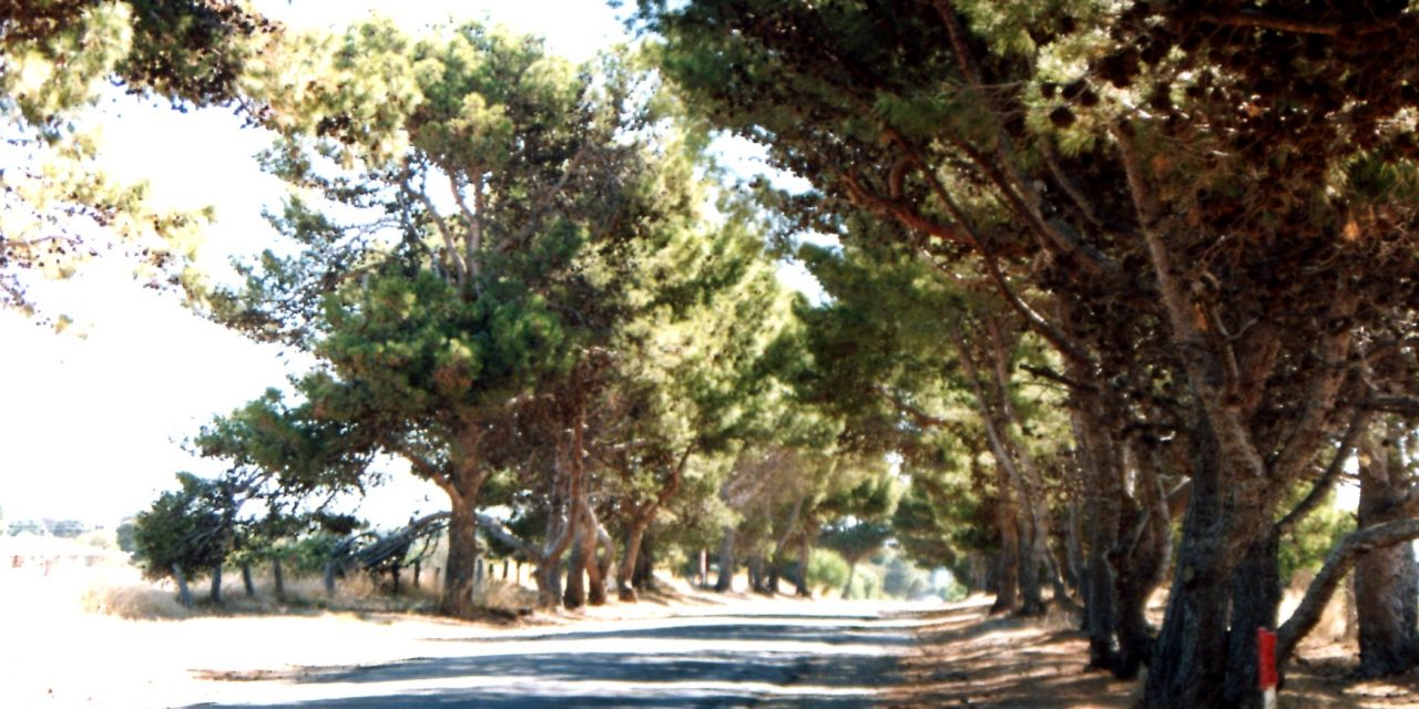 The pines of Port Road