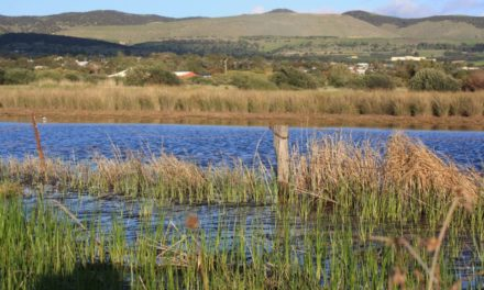 Labor commits to creating Aldinga Washpool Conservation Park
