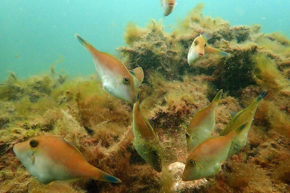 Adelaide's new shellfish reef could be headed south
